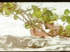 DГ©sirs sous les Tropiques